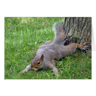 Het Wenskaart van Splat van de eekhoorn