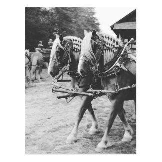 Het werk de Paarden van het Ontwerp in Zwart-wit Briefkaart