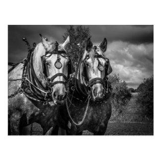Het werk Paarden Briefkaart