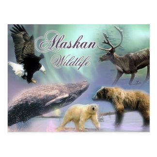 Het Wild van Alaska Briefkaart