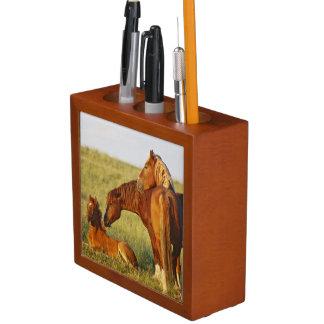Het wilde caballus van Equus van het Paard) volwas Pennenhouder