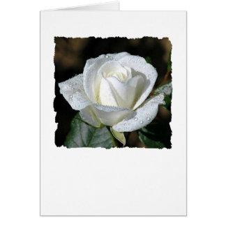 Het wit nam met Dauw toe Briefkaarten 0