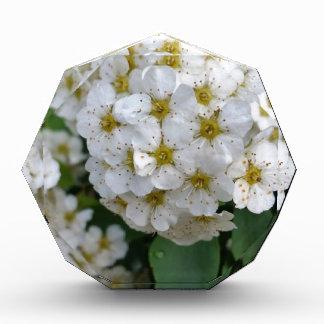 Het witte bloemen gloeien prijs