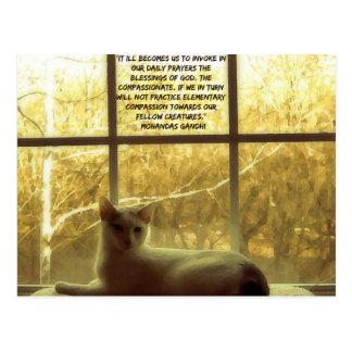 Het witte Citaat van de Kat & van het Medeleven Briefkaart