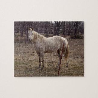 Het witte Raadsel van het Paard Foto Puzzels