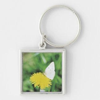 Het witte vlinder voeden op een paardebloem sleutelhanger