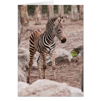 Het zebra van het baby briefkaarten 0