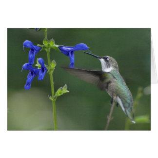 Het zoemen van de salviasaffier van de Vogel blauw Briefkaarten 0