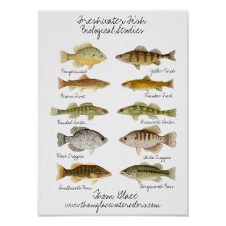 Het zoetwater Poster van Vissen