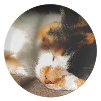 Het Zonnen van de Kat van het calico Melamine+bord