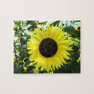 Het zonnige Raadsel van de Zonnebloem Foto Puzzels