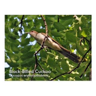Het zwart-gefactureerde Briefkaart van de Koekoek