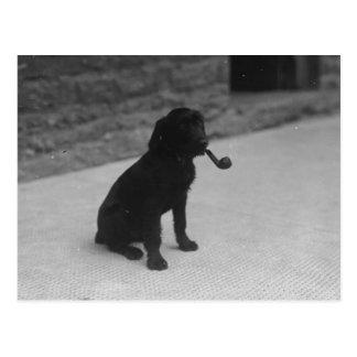 Het zwart-witte Briefkaart van de Pijp van de Hond
