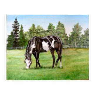 Het zwart-witte paard van de Verf/pony het weiden Briefkaart