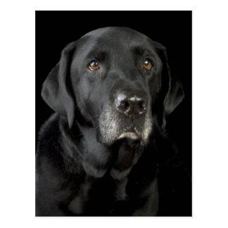 Het zwarte Briefkaart van de Hond van het Puppy Wenskaarten