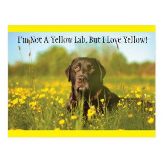 Het zwarte Briefkaart van de Labrador