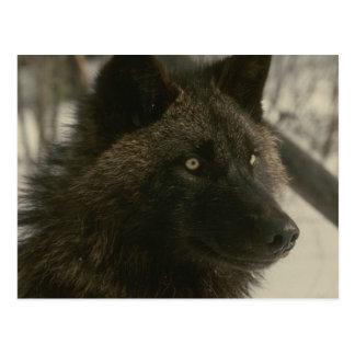 Het zwarte Briefkaart van de Wolf
