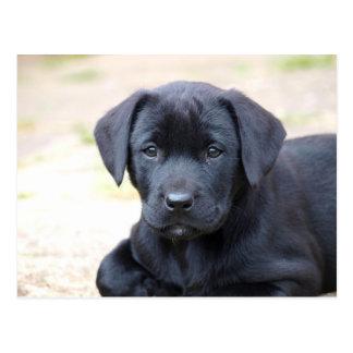 Het zwarte Briefkaart van het Puppy van Labrador