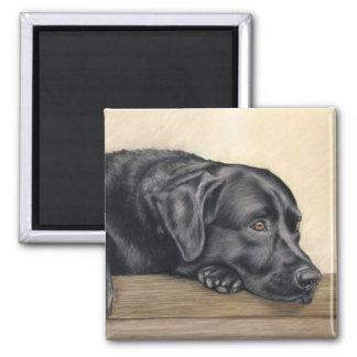 Het zwarte portret van Labrador Magneet