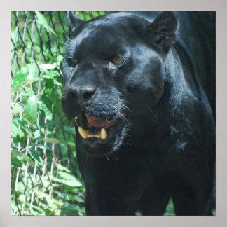 Het zwarte Poster van de Kat van de Panter
