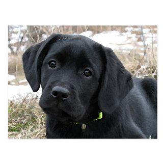 Het zwarte Puppy dat van Labrador - op de Lente Briefkaart