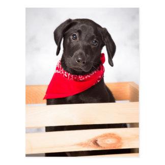 Het zwarte Puppy van de Labrador Briefkaart