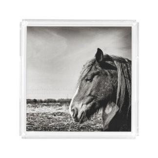 Het zwarte & Witte Dienende Dienblad van het Paard