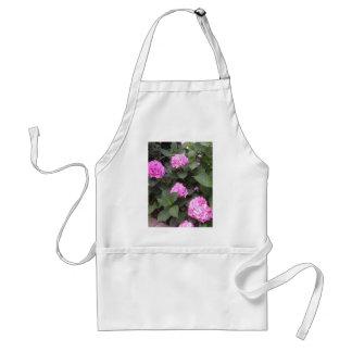 Hete Roze Hydrangea hortensia Standaard Schort
