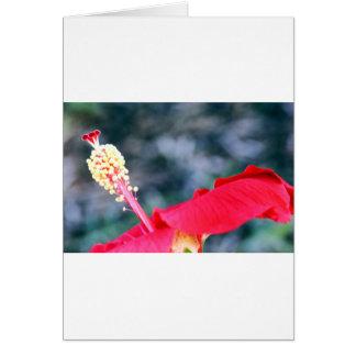 Hibiscus 4 kaarten