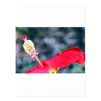 Hibiscus 4 wens kaart