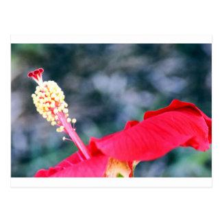 Hibiscus 4 wenskaarten