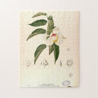 """Hibiscus campylosiphon"", c. 1880 Legpuzzel"