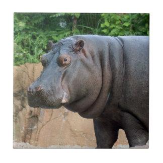 hippo-6 tegeltje