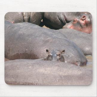 Hippo die u bekijken muismatten