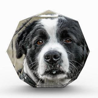 hond acryl prijs