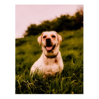 hond briefkaart