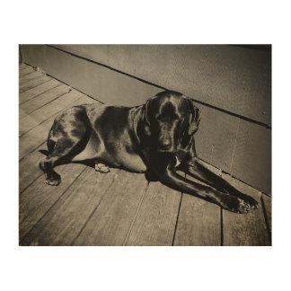 Hond die rond hangen foto op hout