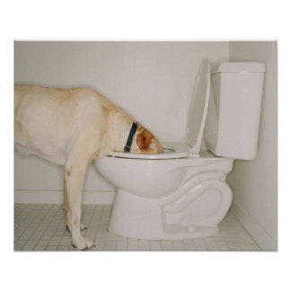 Hond die uit Toilet drink Poster