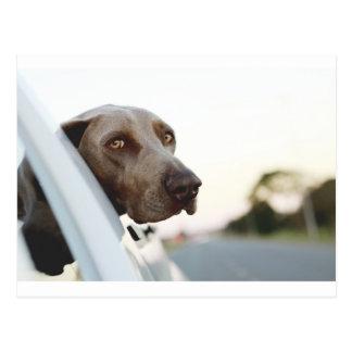 Hond met hoofd uit een autoraam briefkaart