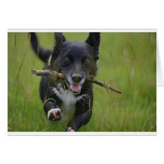 Hond met stok wenskaart