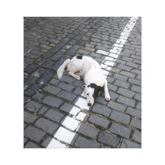Hond op de Lijn Canvas Afdruk