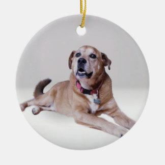 Hond op een ornament
