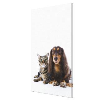 Hond (Tekkel) en kat (Japanse kat) op wit Canvas Afdruk