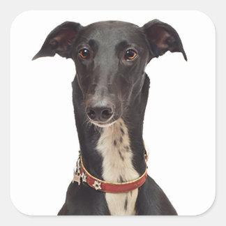 Hond van het Puppy van de windhond de Zwart-witte Vierkante Sticker