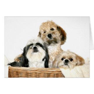 Honden in wasmand briefkaarten 0