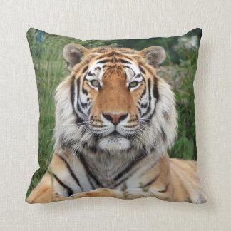 Hoofd mannelijk mooi de fotokussen van de tijger, sierkussen