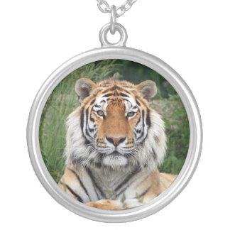 Hoofd mooie de fototegenhanger van de tijger, zilver vergulden ketting