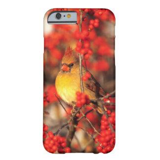 Hoofd vrouwelijke en rode bessen, IL Barely There iPhone 6 Hoesje