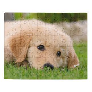 HoofdFoto van de Hond van de Dromen van het Puppy