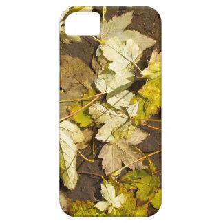 Hoogste uitzicht van bladeren van een de natte de barely there iPhone 5 hoesje